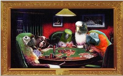pokerbirds image